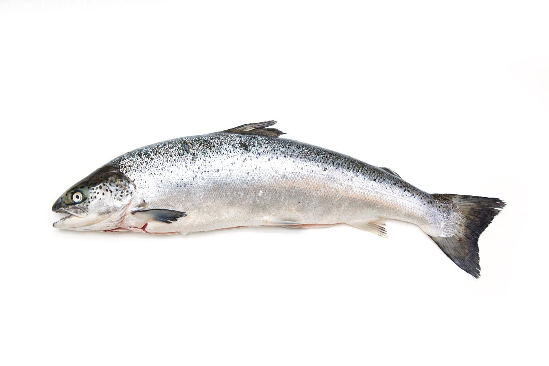 Rød fisk